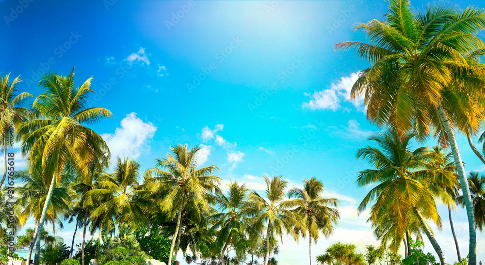 Fototapeta Beautiful tropical palm trees against blue sky with white clouds. Natural background with copy space.