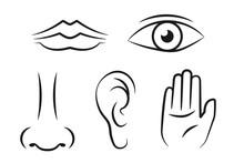 5 Sense Line Icon Set. Clipart...