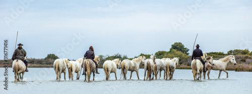 Photo White Camargue Horses