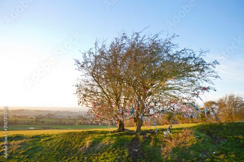 Photo Fairy tree at Hill of Tara, Ireland