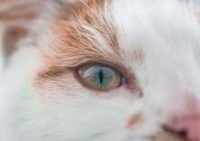Cat Eye Close Up Detail