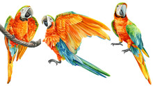 Parrot On An Isolated White Background, Watercolor Drawing, Tropical Birds
