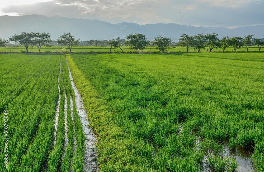 Fototapeta 滋賀県の田舎風景