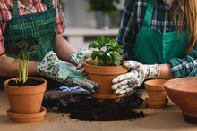 Mother And Daughter Repotting ...