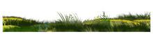 Grass, Meadow. Vector. Juicy S...
