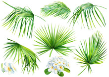 Tropical Palm Leaves And Plumeria Flowers On An Isolated White Background, Set Of Green Plants, Watercolor Illustration, Jungle Design, Botanical Painting