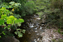 Mossman River And Lookout In R...