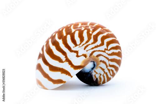 Valokuva Tiger striped shell nautilus pompilius natural seashell isolated on white background