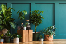 Modern Composition Of Home Garden Filled A Lot Of Beautiful Plants, Cacti, Succulents, Air Plant In Different Design Pots. Stylish Botany Interior. Green Wall Paneling. Template Home Gardening Concept