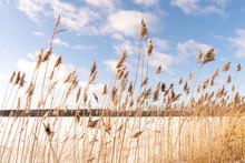 Prairie Grasses In Winter Agai...
