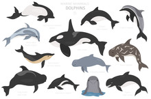 Dolphins Set. Marine Mammals C...