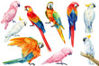 canvas print picture - set of parrots, white and pink cockatoo, red and yellow macaw on an isolated white background, watercolor illustration, clipart tropical birds