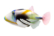 Tropical Coral Fish Picasso Tr...
