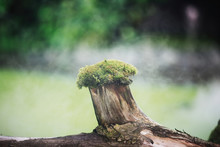 Thick Withered Tree Branch With Fleecy Green Moss