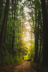 Portugal Caminho em terra pela floresta