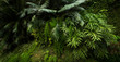 canvas print picture - Lush vegetation in a tropical forest
