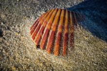 Seashell On A Windswept Atlant...