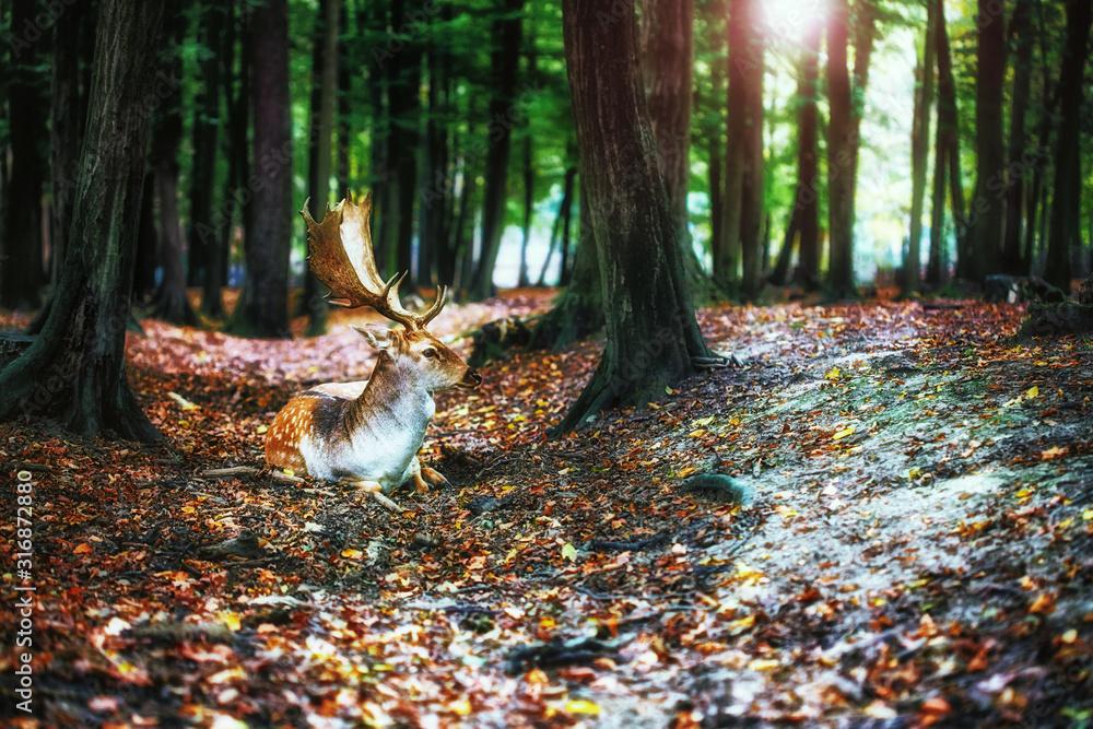 Fototapeta Magical deer with antlers in wilderness