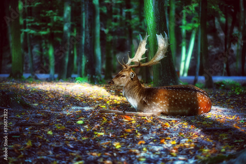 obraz PCV Magical deer with antlers in forest