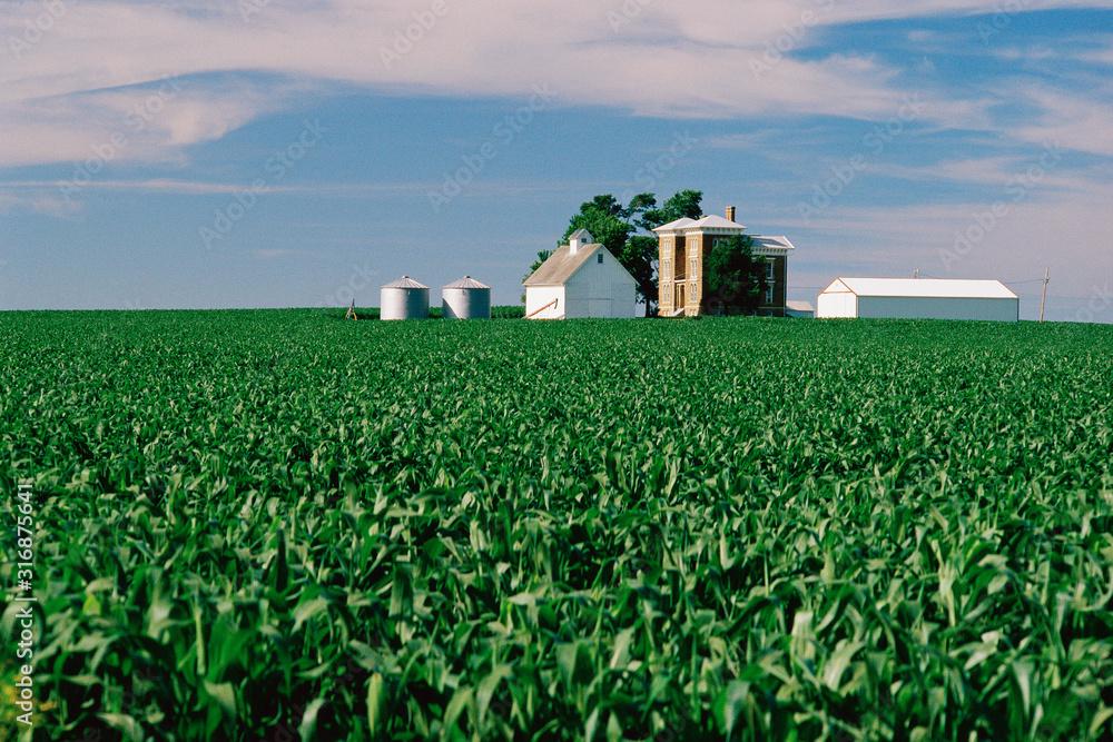 Fototapeta Field with farm buildings beyond