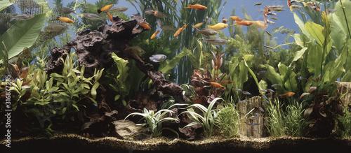 fish in the aquarium Wallpaper Mural
