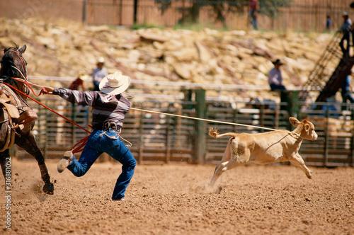 Fotomural  Cowboy roping calf in rodeo