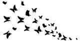 Fototapeta Motyle - butterfly400