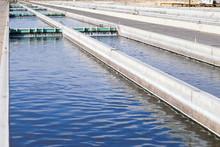 Replenishing Tank At Fish Hatchery
