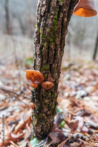Brown mushroom on tree trunk