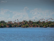 Landscape Of A Sea Surrounded By Greenery With Pink Seagulls Flying Above It Under A Cloudy Sky