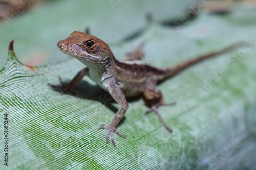 Photo Closeup of a brown Agamas standing on a plan under sunlight with a blurry backgr