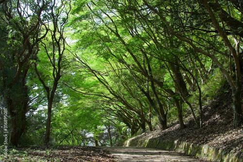 母智丘公園の遊歩道