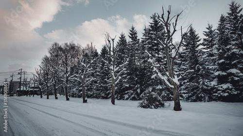 Fotomural  겨울