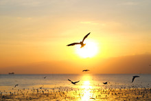 Silhouette Fly Seagull With Su...