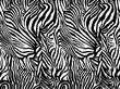 Vector animal zebra print. Seamless Tiger pattern.