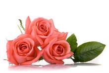 Orange Rose Flower Bouquet Iso...