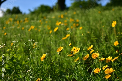 Beautiful field with yellow flowers on a blurred background