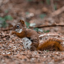 Closeup Shot Of A Baby Squirrel Standing On The Ground