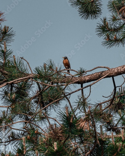Vertical shot of a brown bird on a tree branch with a blue sky in the background
