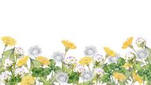 野の花 タンポポとク...