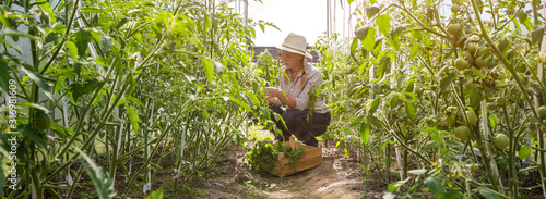 Fototapeta Young girl in a straw hat and garden gloves treats sprinkles of plant bushes in the garden on a summer day, the concept of gardening and farming, generation z hobby obraz