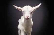 Portrait Of A Cute Little Whit...