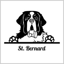 Dog Head, Saint Bernard Breed, Black And White Illustration