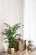 Beautiful Green Potted Plants ...