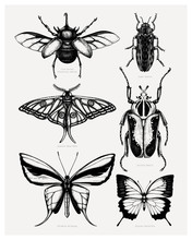 Vector Collection Of High Detailed Insects Sketches. Hand Drawn Beetles And Butterflies Illustrations In Vintage Style. Entomological Set Of Realistic Insects