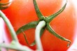 Closeup shot of tomatoes on a white surface