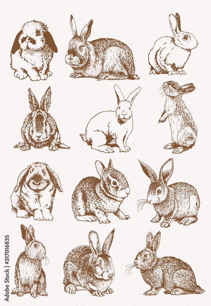 Fototapeta Graphical set of bunnies , sepia background, vector illustration, Easter bunny