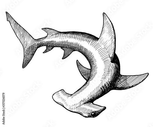 Photographie hammer fish, vintage black ink hand drawn illustration