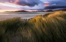Grass By Beach Of Luskentyre D...