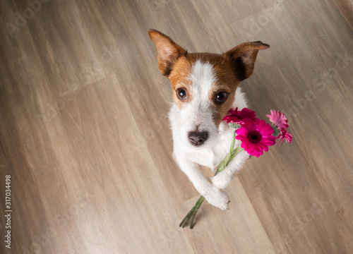 Fotomural dog with a flower